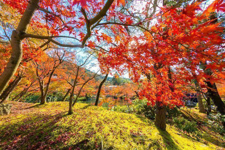 【口コミあり】埼玉でAGA・薄毛治療ができる評判のおすすめクリニック5選