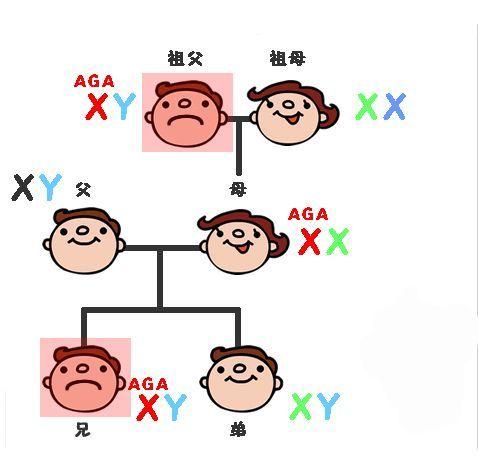 髪質 薄毛の遺伝子① 母方の遺伝子を引き継ぐ