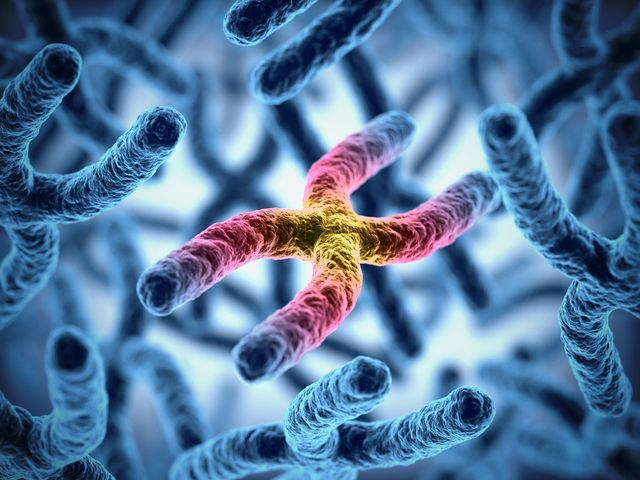 遺伝 ハゲが遺伝すると言われる理由