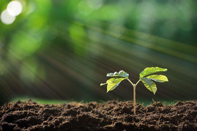 フィンジア その他に10種類の成長成分を配合!
