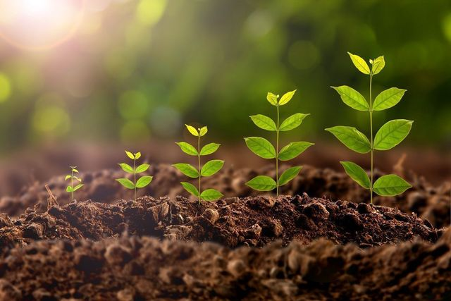 成長因子(グロースファクター) 成長因子は種類がたくさんある