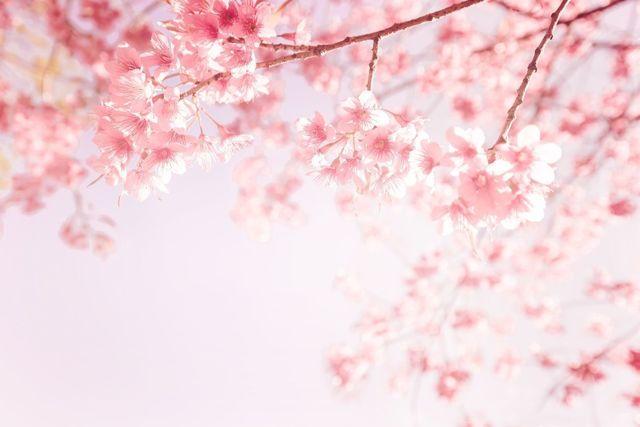 ストレス <春> 環境の変化やアレルギーが抜け毛の原因