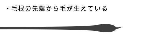 抜け毛 【進行度1】毛根からヒゲしっぽのようなものが出ている