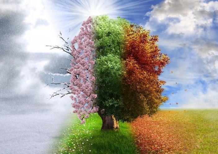 生活習慣 春、夏、冬の抜け毛の原因対策とは