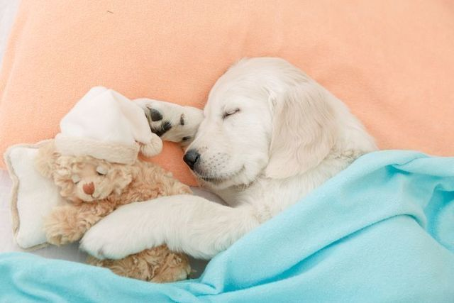 生活習慣 睡眠不足
