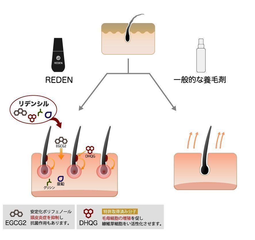 リデン Q. リデンの効果のメカニズムを教えて下さい