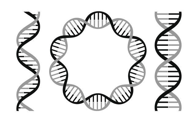 壮年性脱毛症 男性ホルモン量は遺伝が大きく関係している