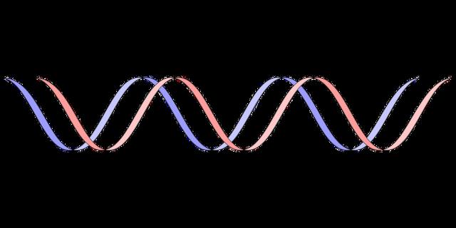 AGA若ハゲの原因 5αリダクターゼ分泌量の原因は遺伝