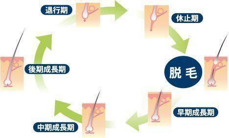 テストステロン ヘアサイクルが乱れ、抜け毛が増える
